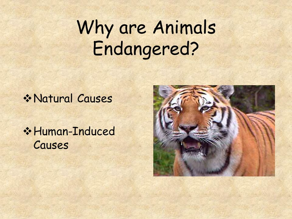 Threatened A species that is likely to become endangered if it is not protected.