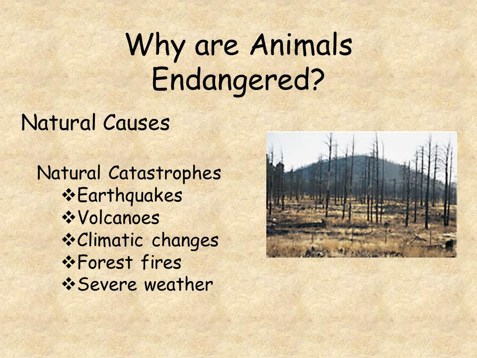Why are Animals Endangered.