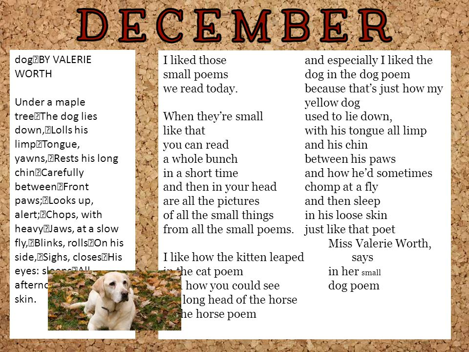 dog BY VALERIE WORTH Under a maple tree The dog lies down, Lolls his limp Tongue, yawns, Rests his long chin Carefully between Front paws; Looks up, alert; Chops, with heavy Jaws, at a slow fly, Blinks, rolls On his side, Sighs, closes His eyes: sleeps All afternoon In his loose skin.