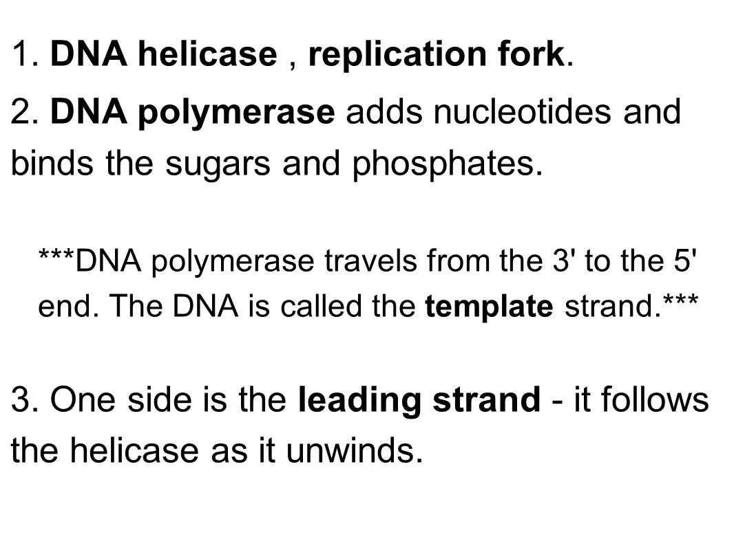 1. DNA helicase, replication fork. 2.