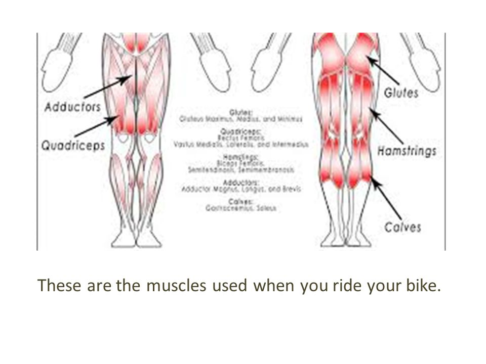 These are the muscles used when you ride your bike.