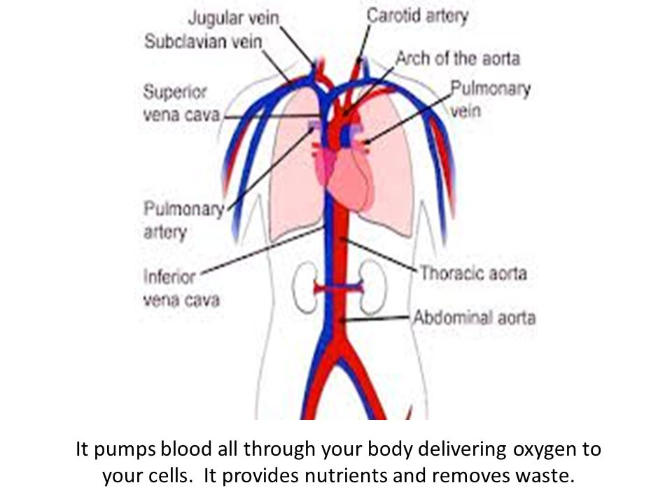 It pumps blood all through your body delivering oxygen to your cells.