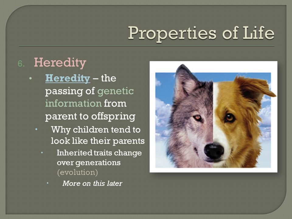 6. Heredity Heredity – the passing of genetic information from parent to offspring  Why children tend to look like their parents  Inherited traits c
