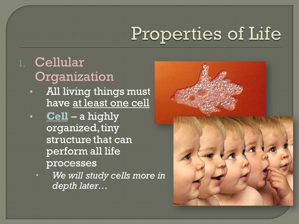 1. Cellular Organization All living things must have at least one cell Cell – a highly organized, tiny structure that can perform all life processes 