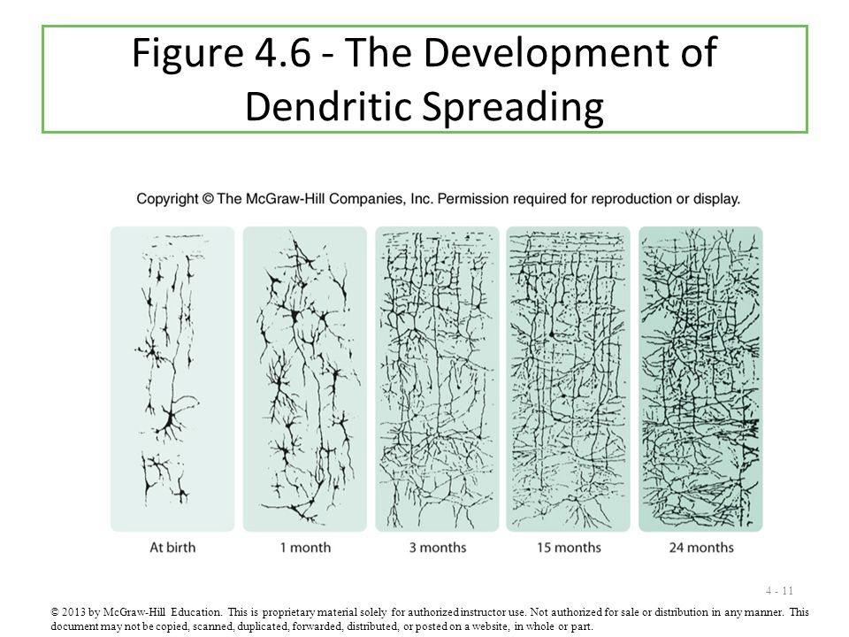 4 - 11 Figure 4.6 - The Development of Dendritic Spreading © 2013 by McGraw-Hill Education. This is proprietary material solely for authorized instruc
