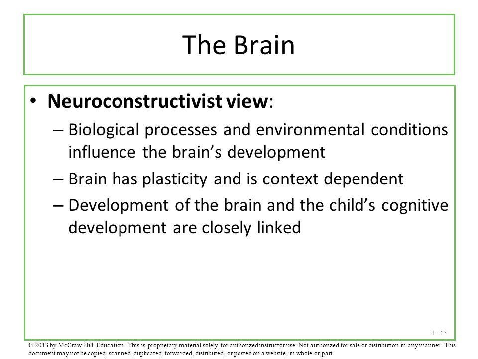 4 - 15 The Brain Neuroconstructivist view: – Biological processes and environmental conditions influence the brain's development – Brain has plasticit