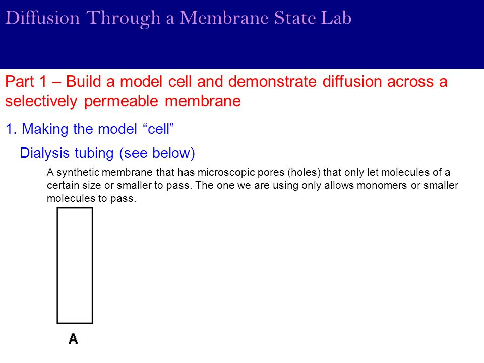 Diffusion Through a Membrane State Lab Part 1 – Build a model cell and demonstrate diffusion across a selectively permeable membrane Dialysis tubing (