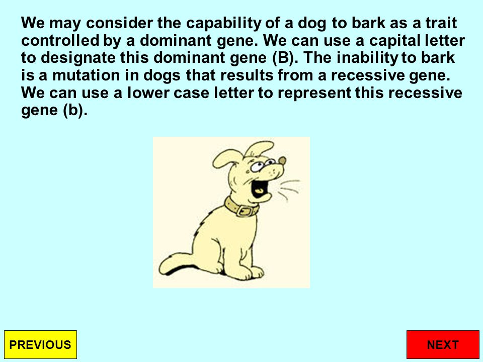 We may consider the capability of a dog to bark as a trait controlled by a dominant gene.