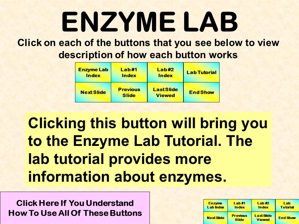 ENZYME LAB Click on each of the buttons that you see below to view description of how each button works Clicking this button will bring you to Lab #2 Enzyme Lab Index Lab #1 Index Lab #2 Index Next Slide Previous Slide Last Slide Viewed Lab Tutorial End Show Click Here If You Understand How To Use All Of These Buttons Enzyme Lab Index Lab #1 Index Lab #2 Index Next Slide Previous Slide Last Slide Viewed Lab Tutorial End Show