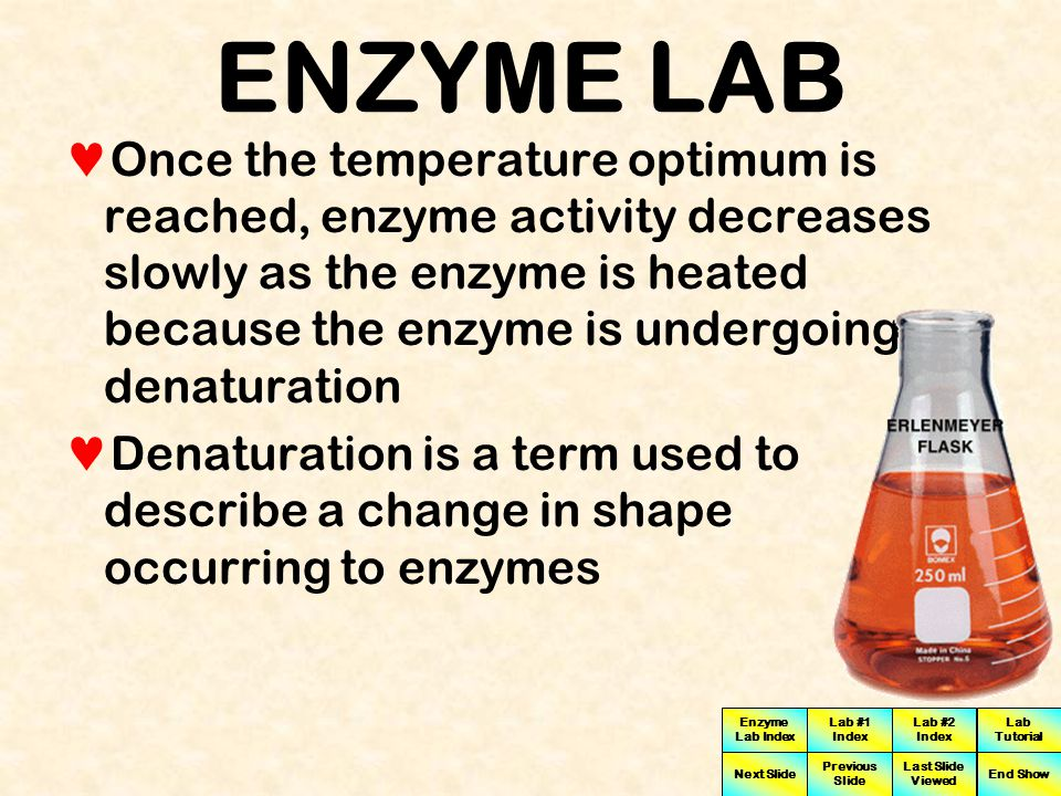 Enzyme Lab Index Lab #1 Index Lab #2 Index Next Slide Previous Slide Last Slide Viewed Lab Tutorial End Show ENZYME LAB Changes in temperature can dramatically influence the activity of most enzymes by affecting enzyme structure As temperatures increase enzyme activity is greater due largely to the increase in kinetic energy (energy of motion) that allows the enzyme and substrate to collide with higher frequency