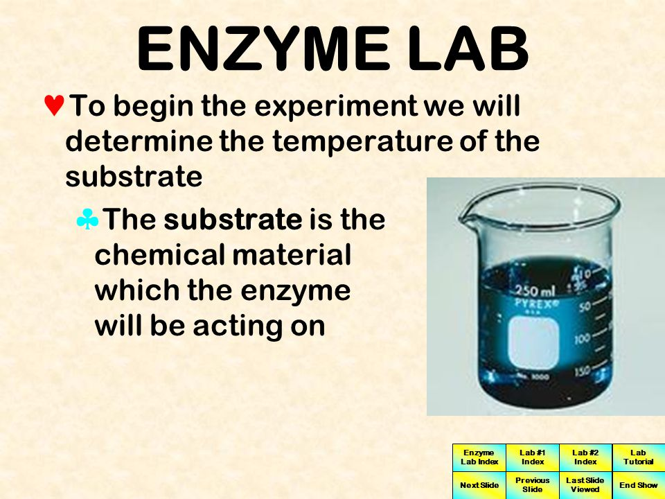 Enzyme Lab Index Lab #1 Index Lab #2 Index Next Slide Previous Slide Last Slide Viewed Lab Tutorial End Show ENZYME LAB This exercise is designed to help you understand the effect of temperature on enzyme activity Invertase You will also analyze data from this experiment to determine the ideal temperature optimum for Invertase (an enzyme) activity