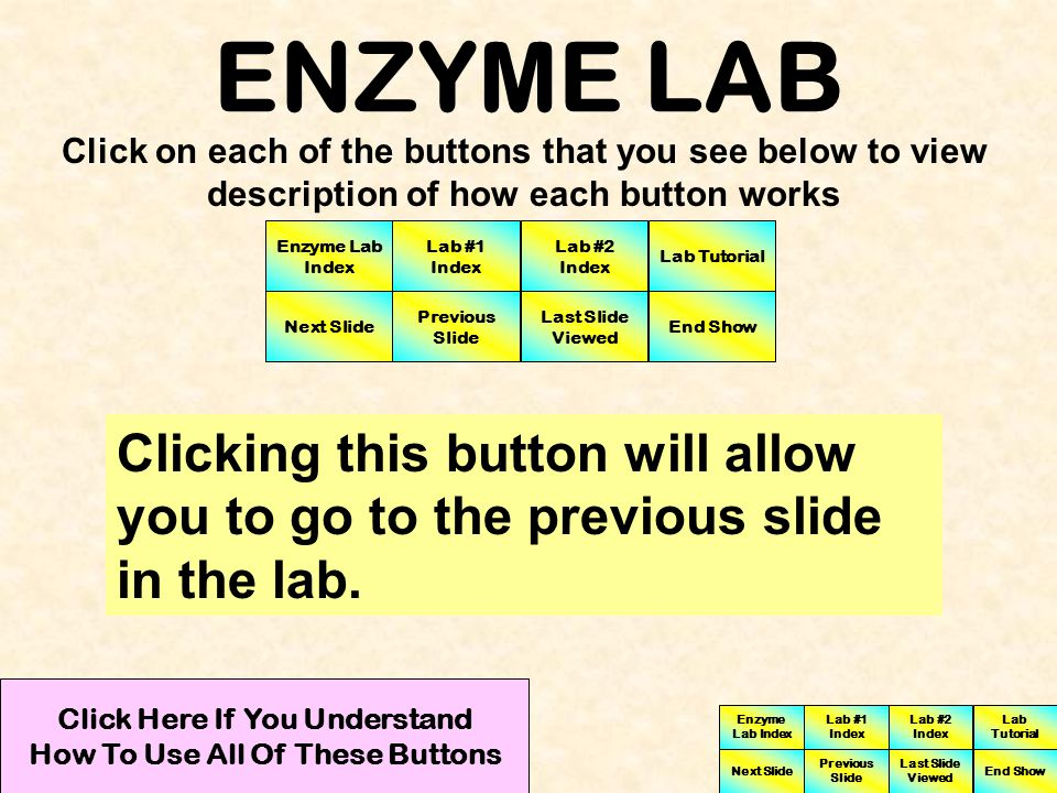 ENZYME LAB Clicking this button will allow you to proceed to the next slide.