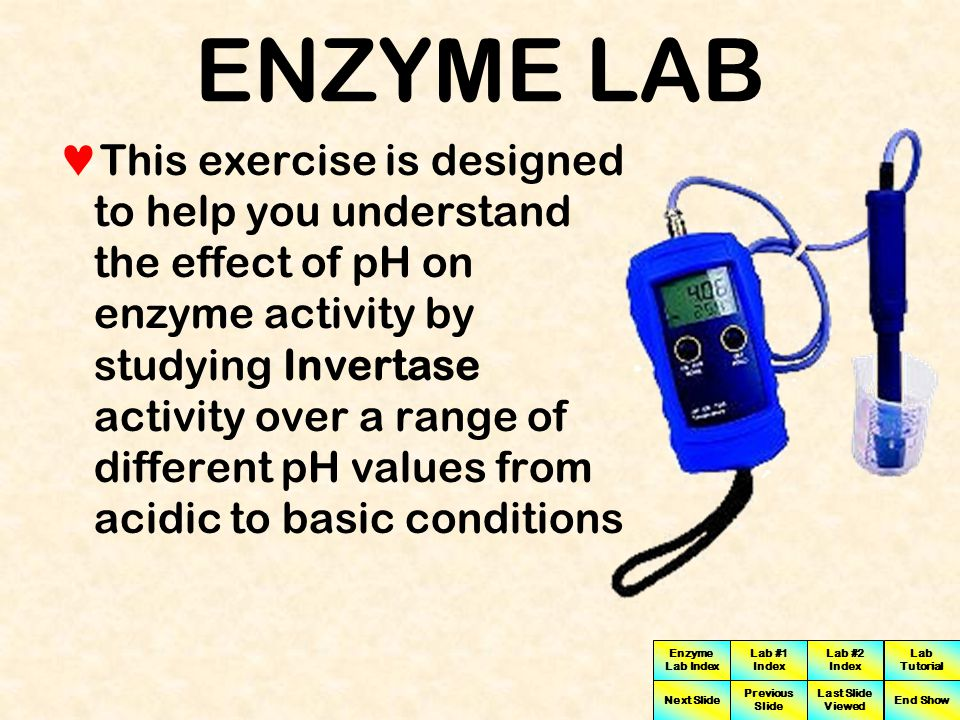 Enzyme Lab Index Lab #1 Index Lab #2 Index Next Slide Previous Slide Last Slide Viewed Lab Tutorial End Show ENZYME LAB For example, in humans, a cytoplasmic protein in a skin cell is surrounded by a different fluid environment at a different pH than a membrane-bound enzyme like Invertase with an active site that projects out into the lumen of the small intestine