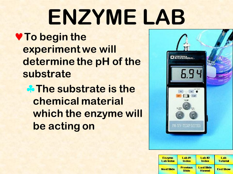 Enzyme Lab Index Lab #1 Index Lab #2 Index Next Slide Previous Slide Last Slide Viewed Lab Tutorial End Show ENZYME LAB This exercise is designed to help you understand the effect of pH on enzyme activity by studying Invertase activity over a range of different pH values from acidic to basic conditions