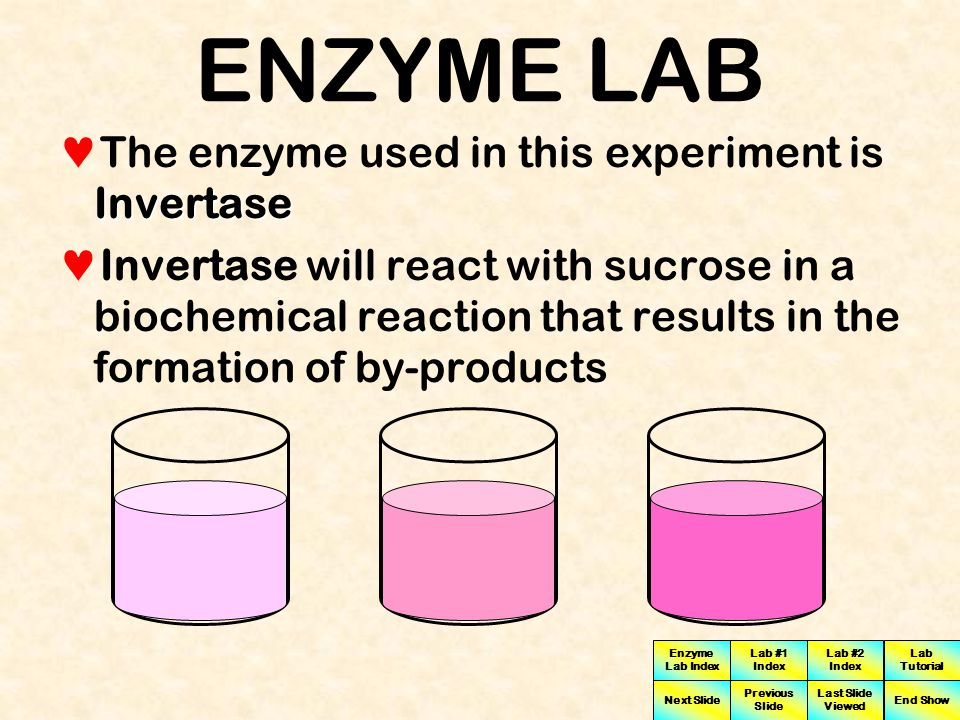 Enzyme Lab Index Lab #1 Index Lab #2 Index Next Slide Previous Slide Last Slide Viewed Lab Tutorial End Show ENZYME LAB Sucrose The substrate used in this experiment is Sucrose Substrate concentration for sucrose for this experiment is 90 millimolar units (mM)