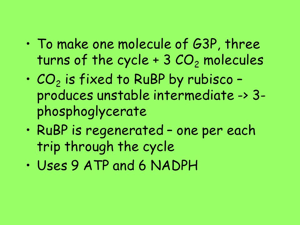 To make one molecule of G3P, three turns of the cycle + 3 CO 2 molecules CO 2 is fixed to RuBP by rubisco – produces unstable intermediate -> 3- phosp