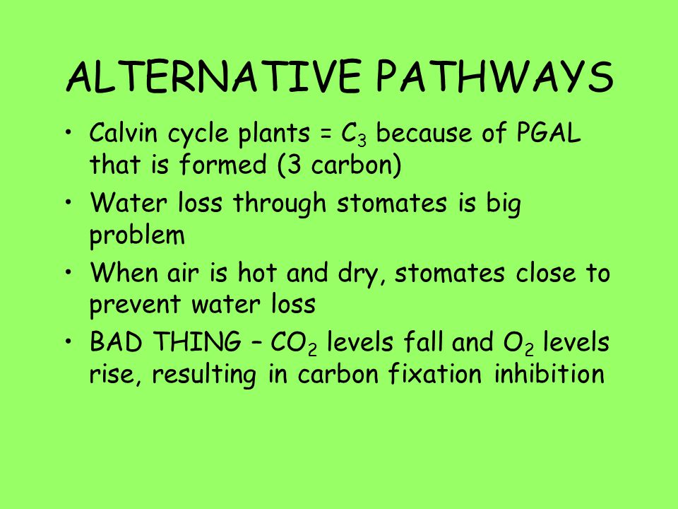 ALTERNATIVE PATHWAYS Calvin cycle plants = C 3 because of PGAL that is formed (3 carbon) Water loss through stomates is big problem When air is hot an