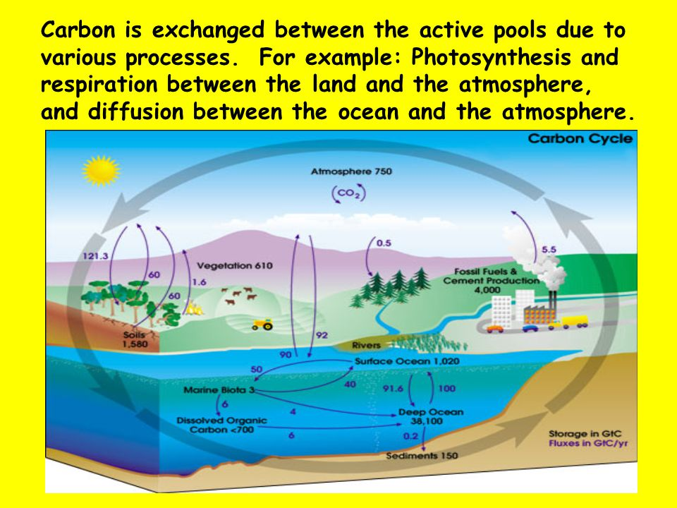 Quick Review of Photosynthesis How plants turn light energy into chemical energy.