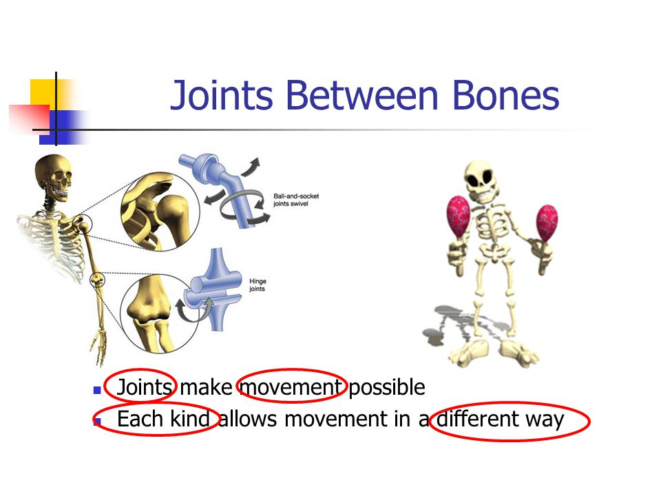Joints Between Bones Joints make movement possible Each kind allows movement in a different way