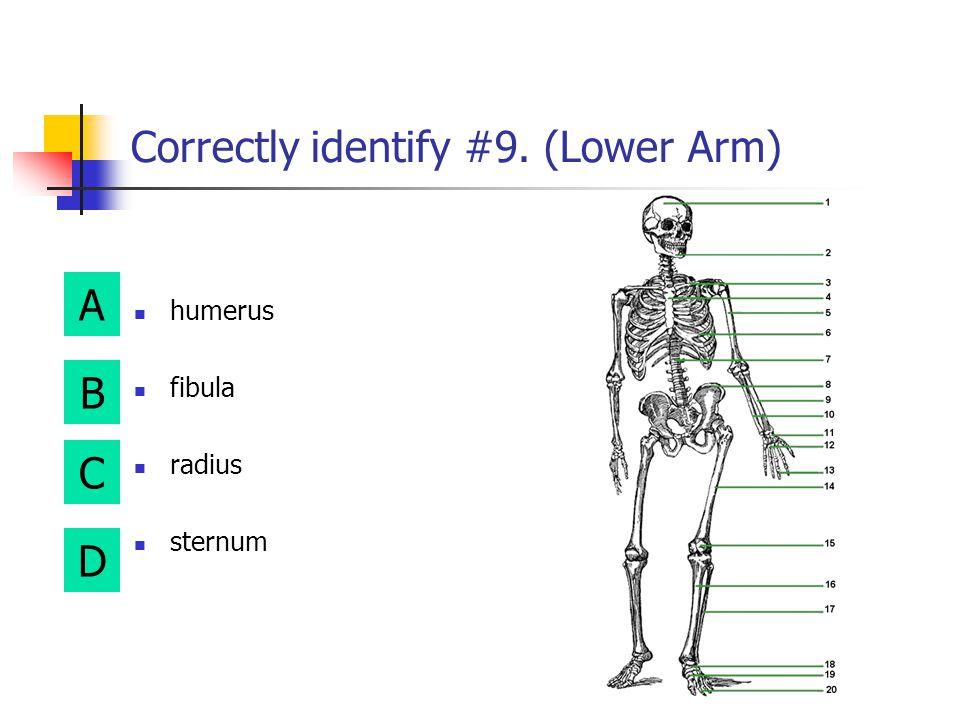 A B D C Correctly identify #5. (Upper arm) tarsals humerus phalanges fibula