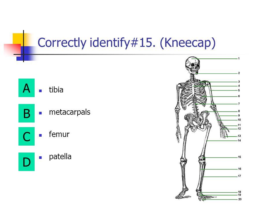 A B D C Correctly identify #13. (Fingers) metatarsals phalanges tarsals patella