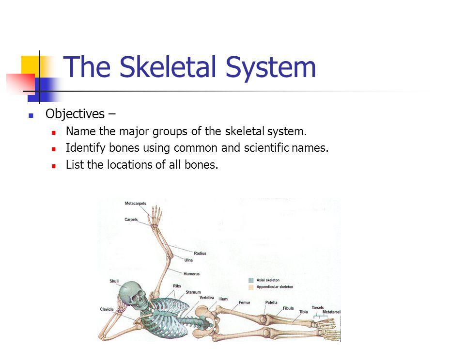 The Skeletal System by Jim Alton Lesson 2