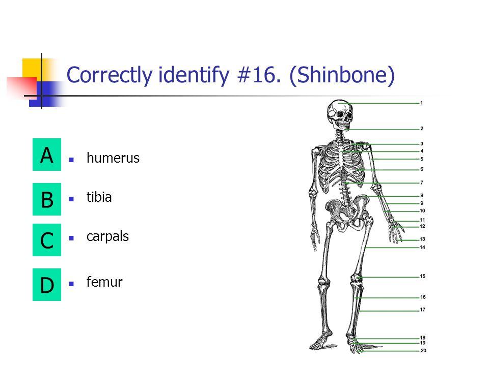 A B D C Correctly identify#15. (Kneecap) tibia metacarpals femur patella