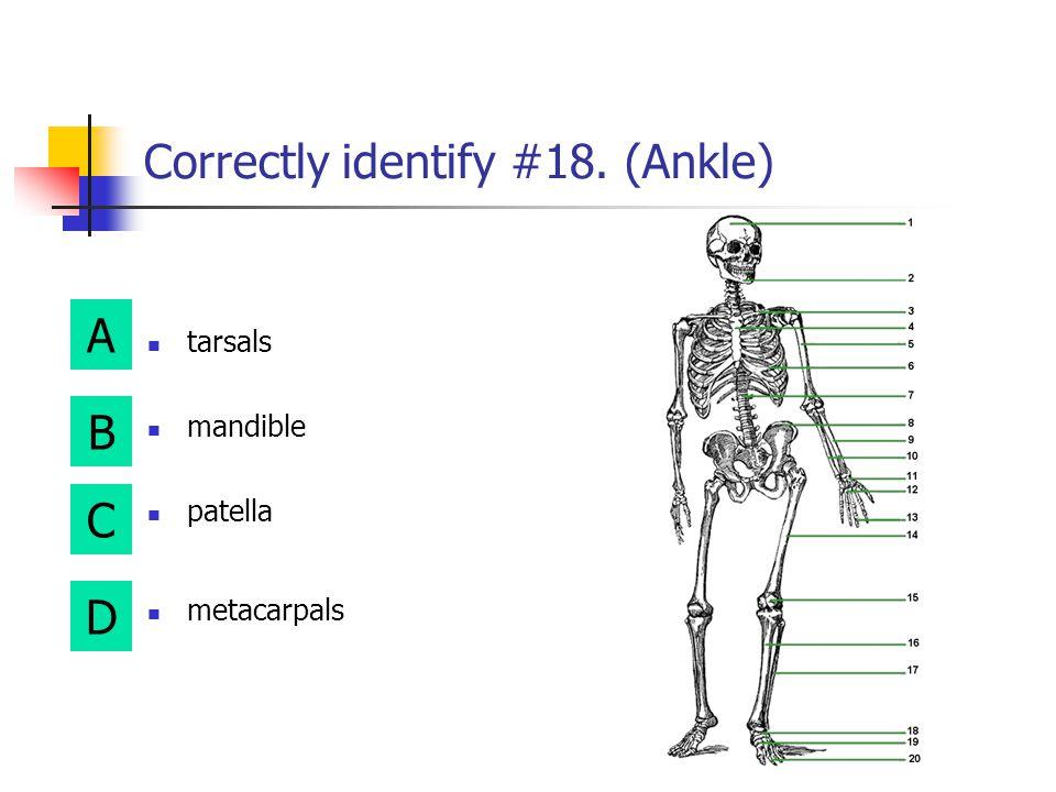 A B D C Correctly identify #16. (Shinbone) humerus tibia carpals femur