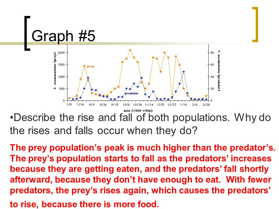 Graph #5 Describe the rise and fall of both populations.