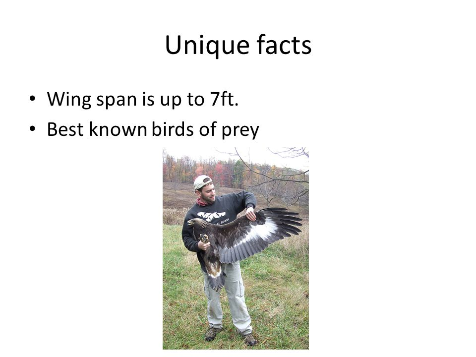 Description They have golden to blond feathers on neck They have some white on tail Weigh up to 15 pounds