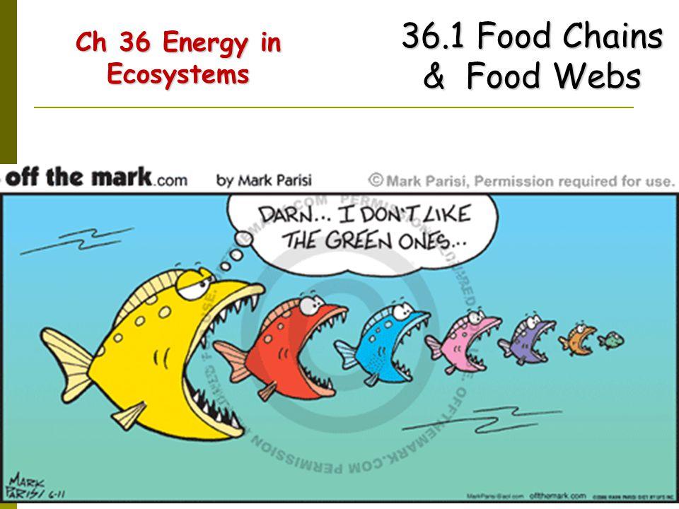 Ch 36 Energy in Ecosystems Ch 36 Energy in Ecosystems 36.1 Food Chains & Food Webs