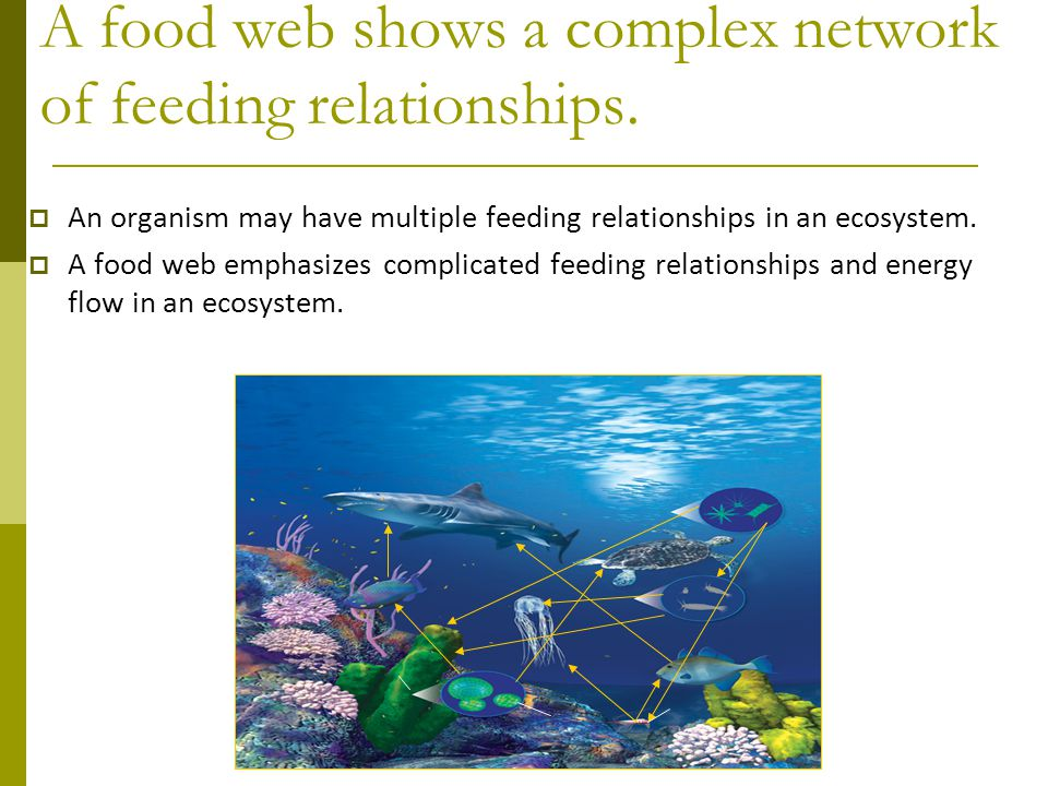  An organism may have multiple feeding relationships in an ecosystem.  A food web emphasizes complicated feeding relationships and energy flow in an