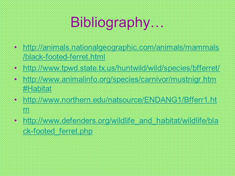 Bibliography… http://animals.nationalgeographic.com/animals/mammals /black-footed-ferret.htmlhttp://animals.nationalgeographic.com/animals/mammals /black-footed-ferret.html http://www.tpwd.state.tx.us/huntwild/wild/species/bfferret/ http://www.animalinfo.org/species/carnivor/mustnigr.htm #Habitathttp://www.animalinfo.org/species/carnivor/mustnigr.htm #Habitat http://www.northern.edu/natsource/ENDANG1/Bfferr1.ht mhttp://www.northern.edu/natsource/ENDANG1/Bfferr1.ht m http://www.defenders.org/wildlife_and_habitat/wildlife/bla ck-footed_ferret.phphttp://www.defenders.org/wildlife_and_habitat/wildlife/bla ck-footed_ferret.php