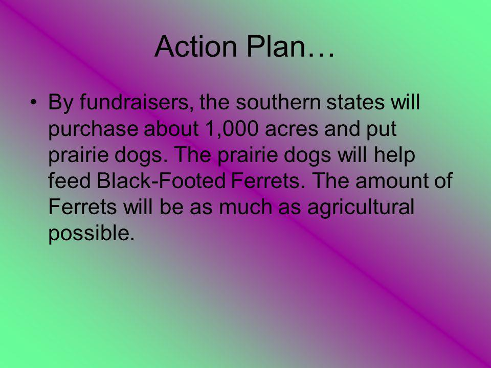 Action Plan… By fundraisers, the southern states will purchase about 1,000 acres and put prairie dogs.