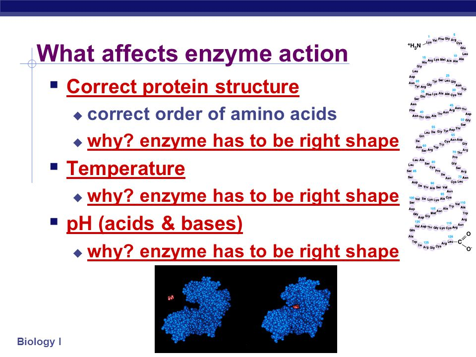 Enzyme vocabulary  Enzyme  helper protein molecule  Substrate  molecule that enzymes work on  Products  what the enzyme helps produce from the reaction  Active site  part of enzyme that substrate molecule fits into