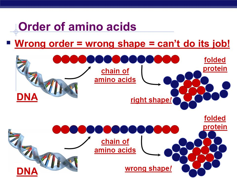 Biology I What affects enzyme action  Correct protein structure  correct order of amino acids  why.