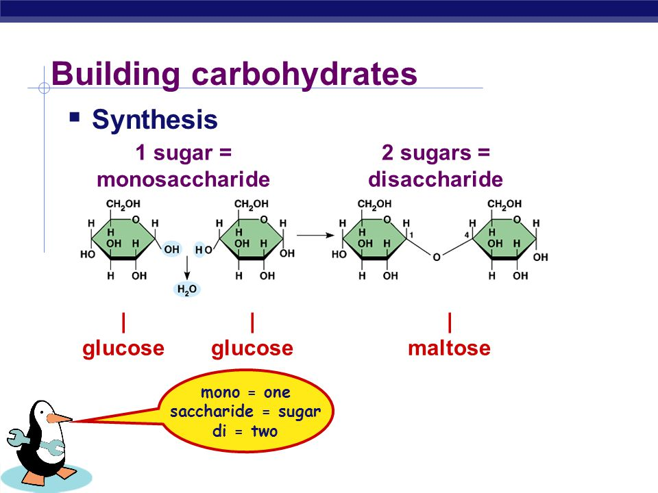 Biology I Sugars = building blocks  Names for sugars usually end in  glucose  fructose  sucrose  maltose OH H H HO CH 2 OH H H H OH O glucose C 6