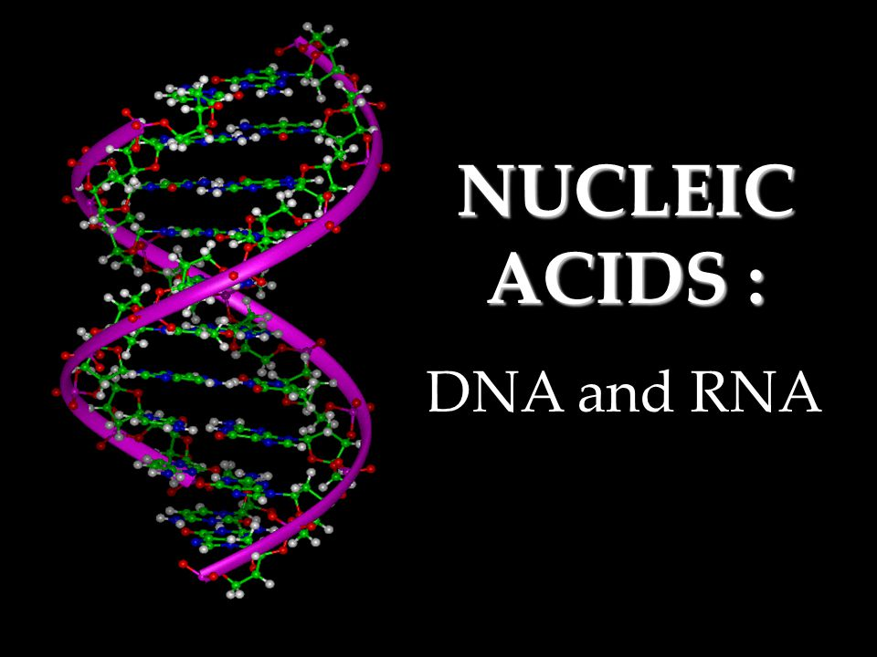 NUCLEIC ACIDS : DNA and RNA