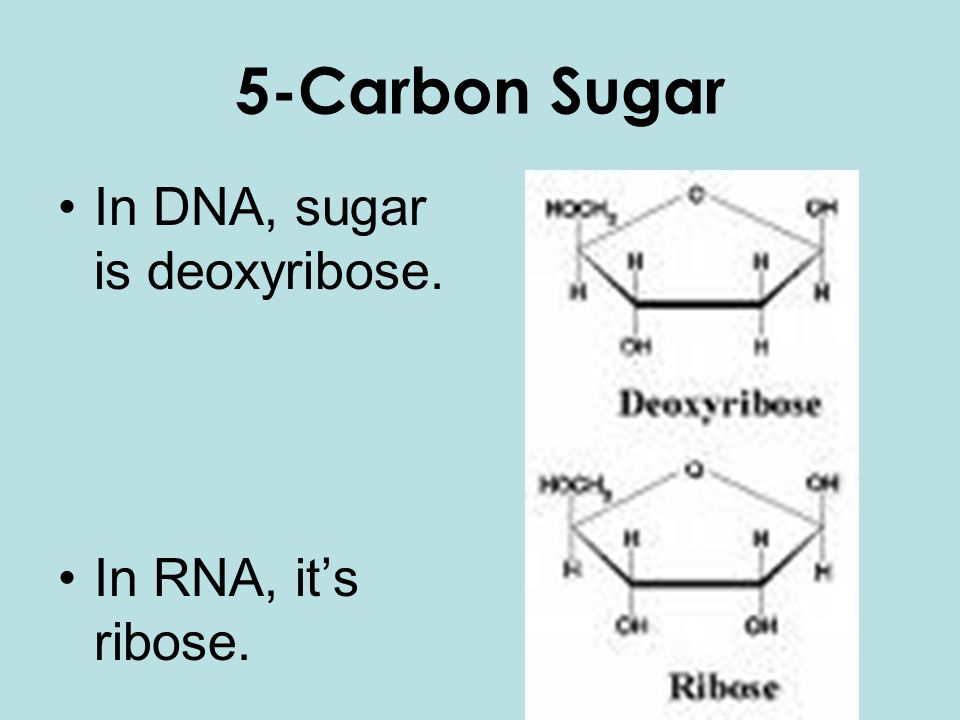 5-Carbon Sugar In DNA, sugar is deoxyribose. In RNA, it's ribose.