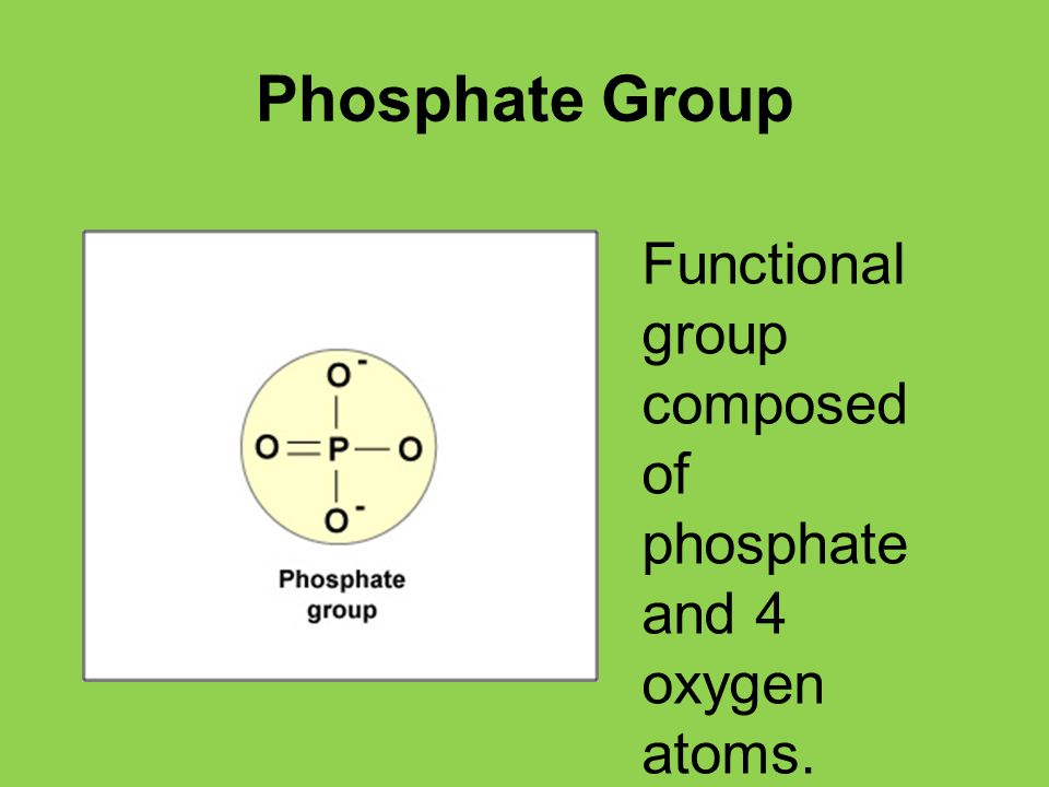 Phosphate Group Functional group composed of phosphate and 4 oxygen atoms.