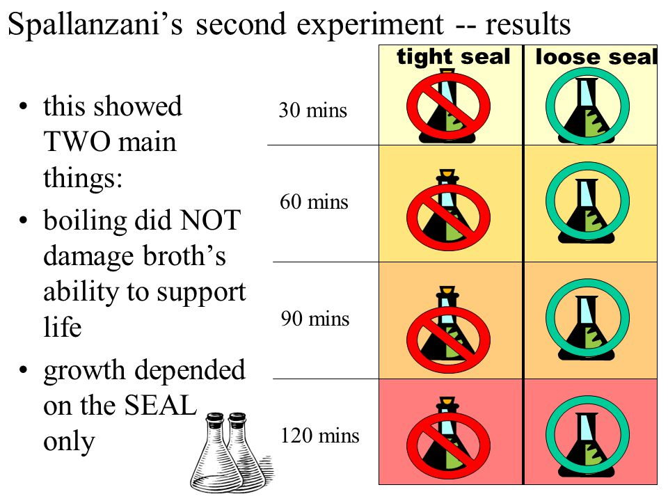 Spallanzani's second experiment he did TIMED BOILINGS then left them partially sealed some partially sealed, some hermetically sealed as in his previous experiment hypothesized that more boiling should lead to less life he left some jars as Needham had (leaky seals), to ensure active principle was not damaged 30 mins 60 mins 90 mins 120 mins tight seal loose seal