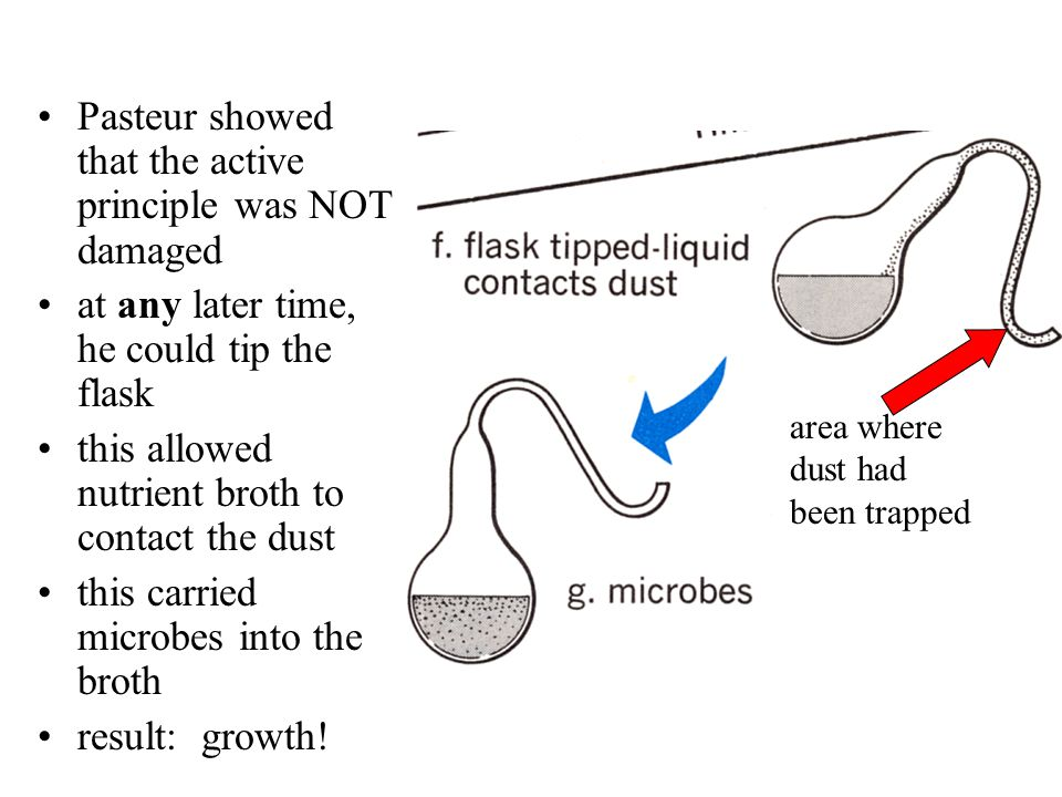 Louis Pasteur 1859– used swan-necked flask flask allowed in air, but trapped dust (and microbes) boiled infusion showed that NO growth occurred, even after many days BUT -- what about damaging the active principle .