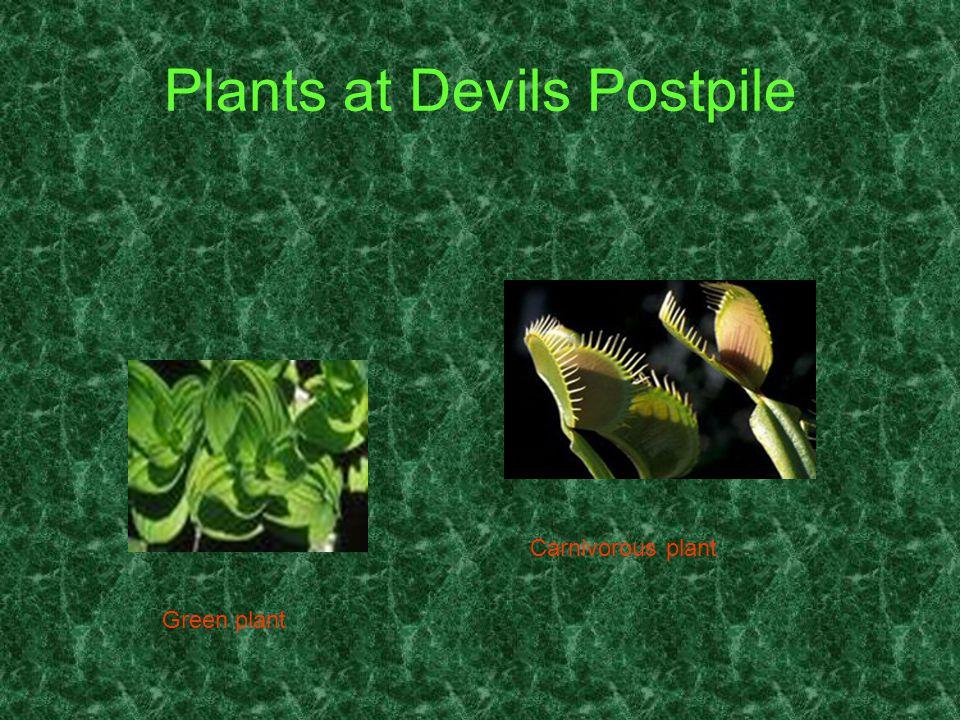 Plants at Devils Postpile Green plant Carnivorous plant