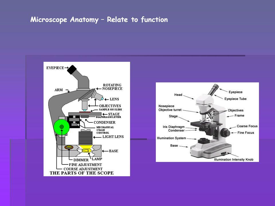 Olympus web site on the anatomy of a microscope   http://www.olympusmicro.com/primer /anatomy/anatomy.html http://www.olympusmicro.com/primer /anatomy/anatomy.html