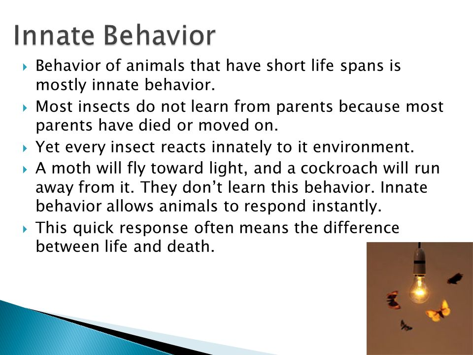  Behavior of animals that have short life spans is mostly innate behavior.  Most insects do not learn from parents because most parents have died or