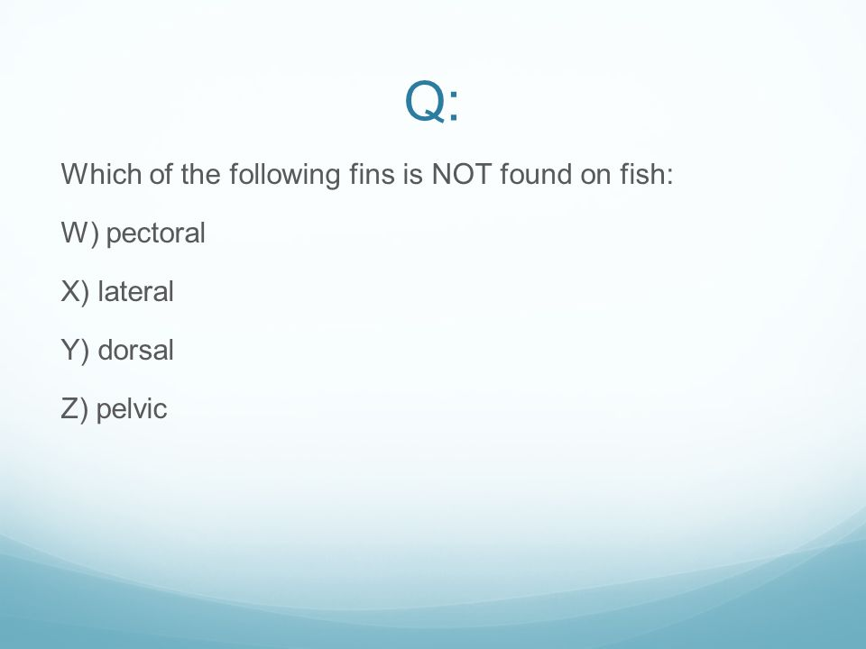 Q: Which of the following fins is NOT found on fish: W) pectoral X) lateral Y) dorsal Z) pelvic