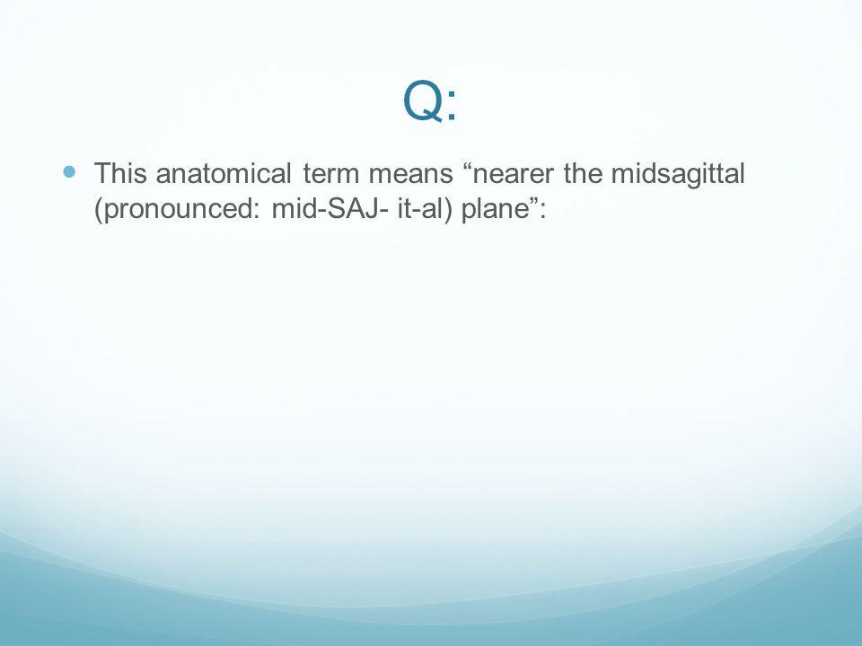 A: Z)Hypothalamus