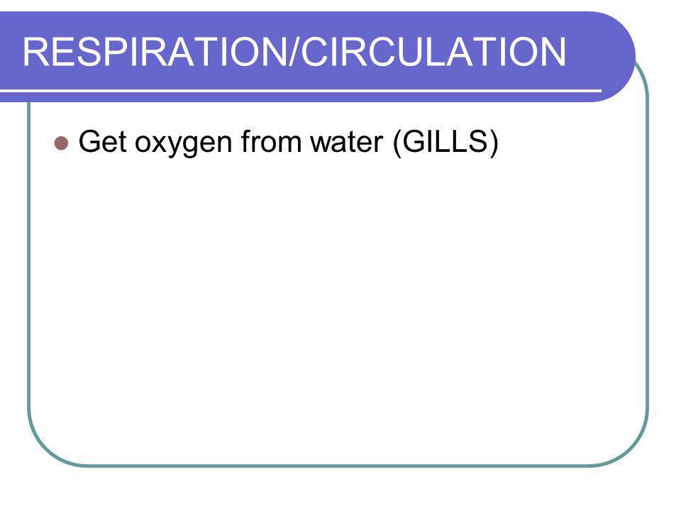 RESPIRATION/CIRCULATION Get oxygen from water (GILLS)