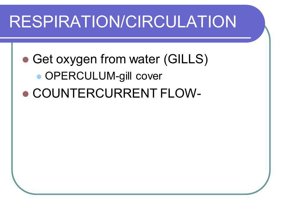 RESPIRATION/CIRCULATION Get oxygen from water (GILLS) OPERCULUM-gill cover COUNTERCURRENT FLOW-