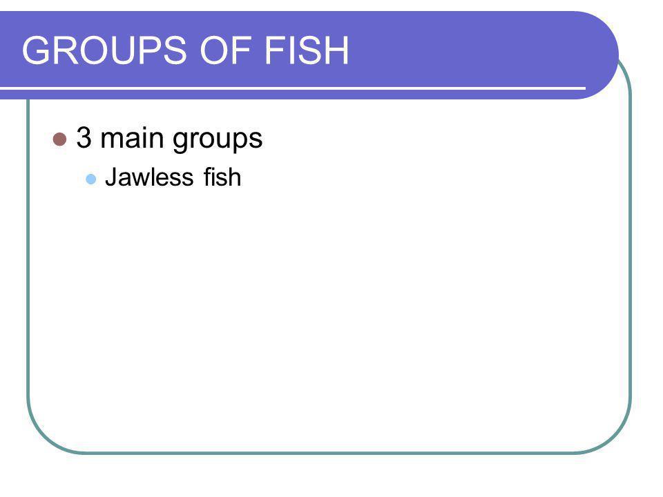 GROUPS OF FISH 3 main groups Jawless fish